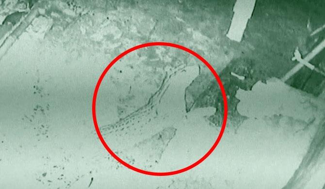 CCTV reveals the strange thieves in Nawalapitiya